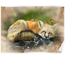 Wooded Fox Poster