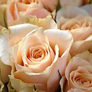 Bunch of Roses by vbk70