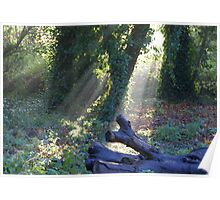 Let sleeping logs lie Poster