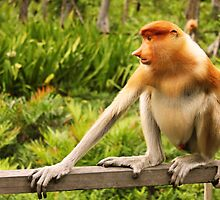 The Endangered Species - Proboscis Monkey by SCDigitalPhoto