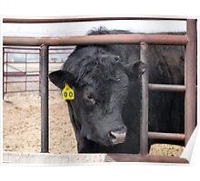# 00  No Bull ... Poster