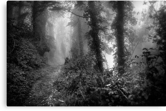 Morning Mist by Richard Mason