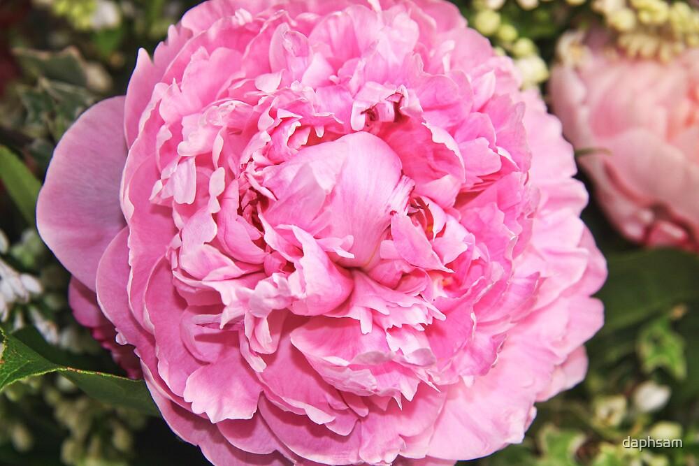 Dramatically Pink Peony by daphsam