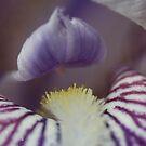 hidden beauty by katpartridge