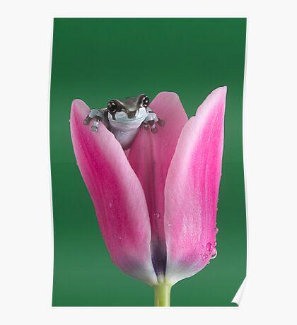 Baby Amazon Milk Frog Poster