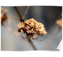 Oh Spider, Where Art Thou? III by Rambling Rose Poster