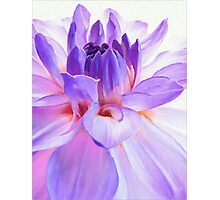 Loving the Light in Dahlia Photographic Print