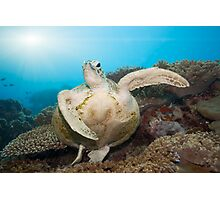 Green turtle underwater Photographic Print