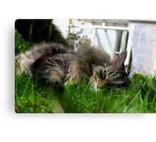 In the Sunshine Feline Good Canvas Print