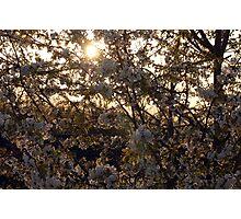 spring 1 Photographic Print