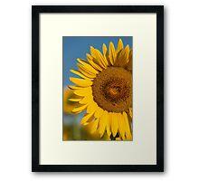 Sunflower Framed Print