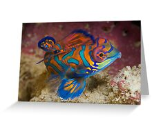 One of the most beautyful coloured fish  Greeting Card