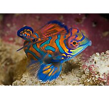 One of the most beautyful coloured fish  Photographic Print