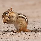 Chipmunk Eating a Peanut by Benjamin Brauer