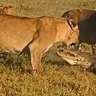 Lion-crocodile interaction 6 by jozi1