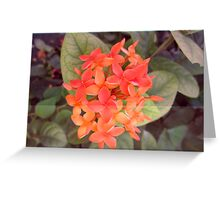 flower spike Greeting Card