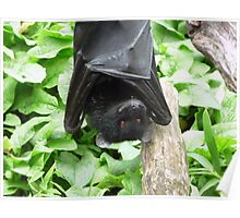 I Haz a Happy- Bristol Zoo Livingstone's fruit bat Poster