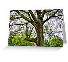Mighty Oak Greeting Card