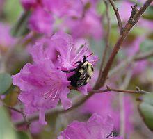 Bumble Bee by LIGHTNINGBUG