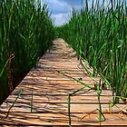 Wetland Boardwalk by BonnieToll
