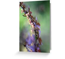 Spring Impressions Greeting Card