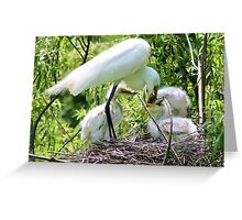 Mama Egret with her Babies Greeting Card