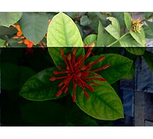 Bud Spike Flowers  Photographic Print