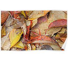 Autumn Colour Poster