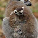 Ring-tailed Lemur Mother & Child  by Lindie