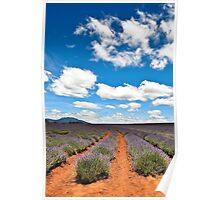 Lavender Farm 1 Poster