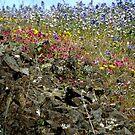 Wildflowers Abound by Patty Boyte