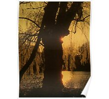 Sunset Behind the Tree Poster