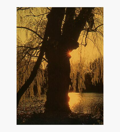 Sunset Behind the Tree Photographic Print