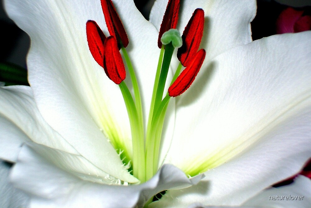 The Heart Of A Lily by naturelover