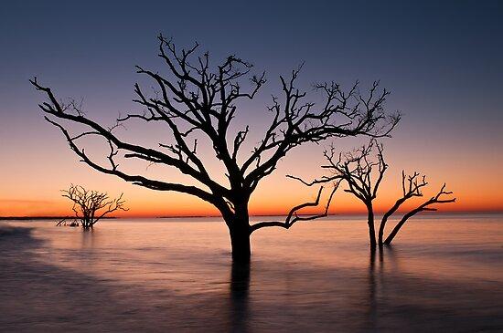 Bone Yard at Dawn by JHRphotoART