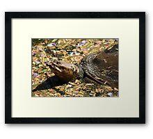 Turtle in His Colorful Surrundings Framed Print