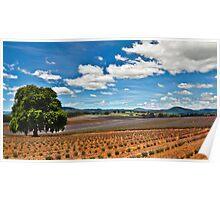 Lavender Farm 2 Poster