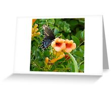 Butterfly and Trumpet Flowers Greeting Card