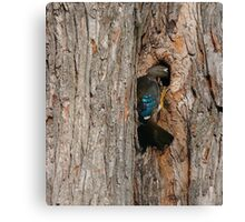 Nest hunting Canvas Print