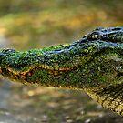 Swamp Monster by Joe Jennelle