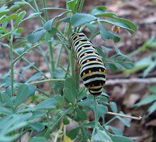 Caterpillar by TxGimGim