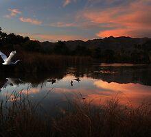 Egret at Dusk by BackroadsRebel