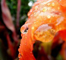 Autumn tears by su2anne