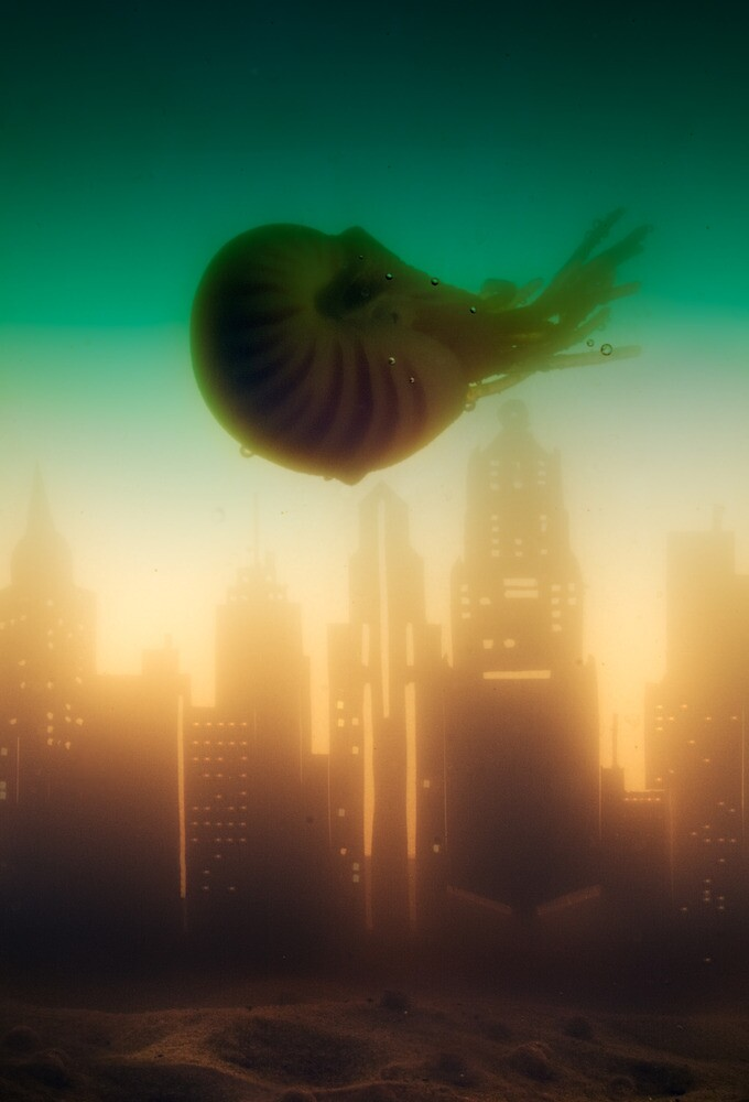 Discovery by Adam Brunckhorst