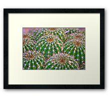 Cactus Marvel Framed Print