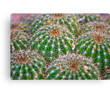 Cactus Marvel Canvas Print