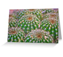 Cactus Marvel Greeting Card