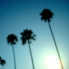 Palms & Dusty Windshield - Burbank, CA by Barnewitz