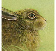 Portrait of a Rabbit Photographic Print