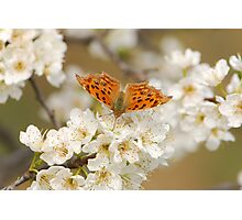 flying freely in the plum tree Photographic Print